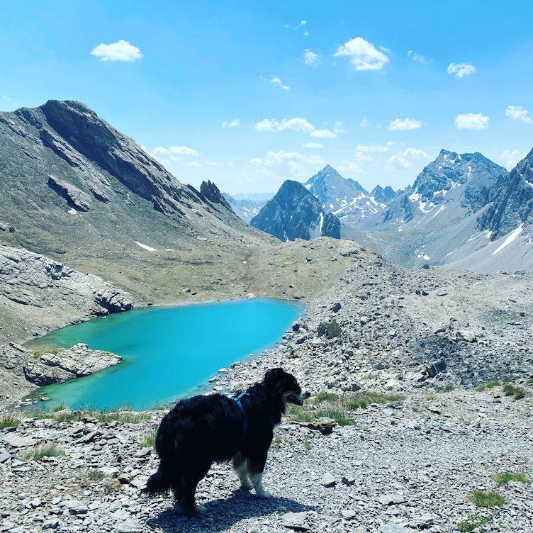Wandern mit hund Dino Icardi Lago Vallonossa Bivacco Barenghi Australian Shepherd