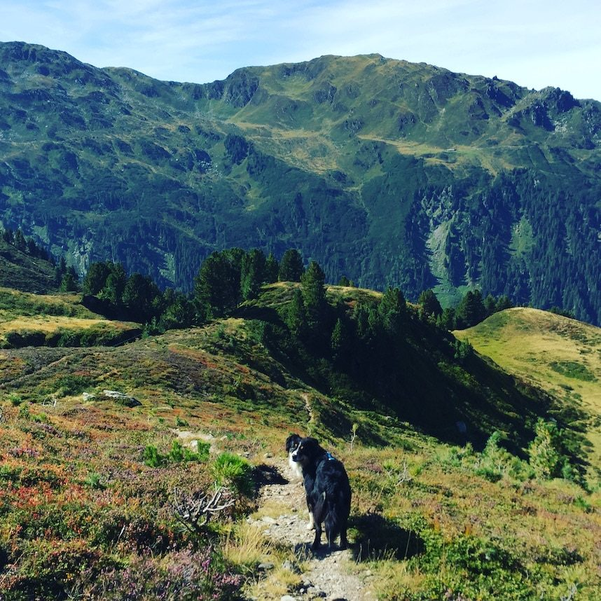 Kelchsau Brixental Wandern mit Hund Kitzbühler Grasberge Australian Shepherd