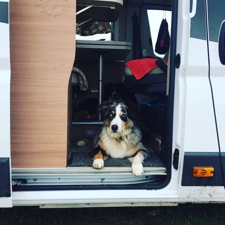 Campingbus Hund Camping Wohnmobil Australian Shepherd Welthundetag