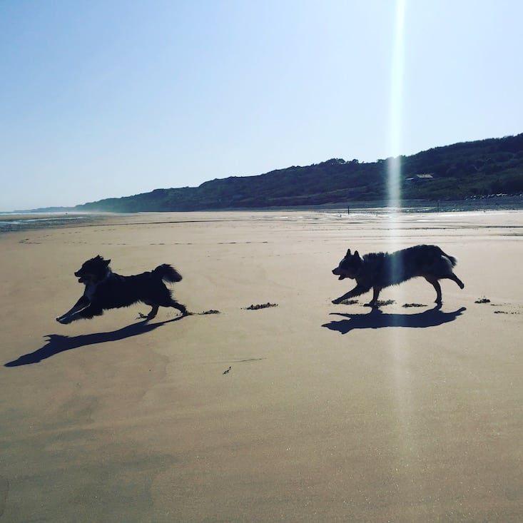 Welthundetag Camping mit Hund Frankreich Normandie Atlantik Hundestrand