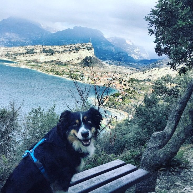 Torbole Gardasee Hund Camping wandern Februar