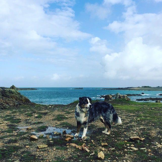 Normandie Hund Camping Atlantik Urlaub Frankreich Wandern Australian Shepherd