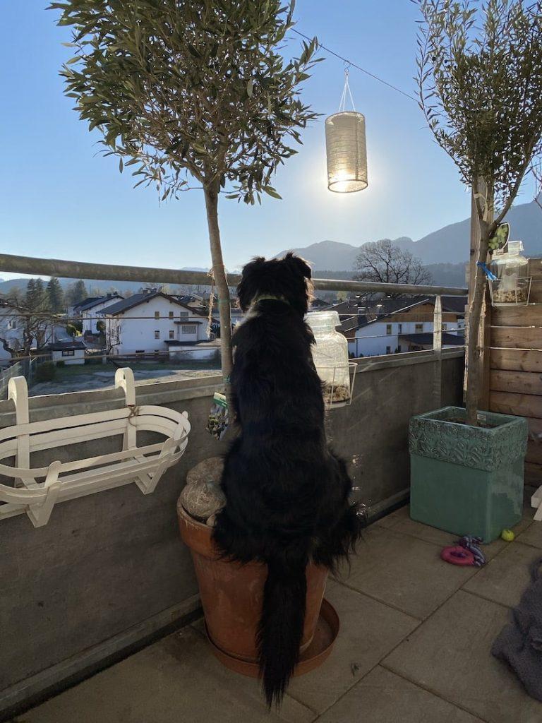 Schönster Ort der Welt Australian Shepherd Reisen mit Hund Ausblick genießen