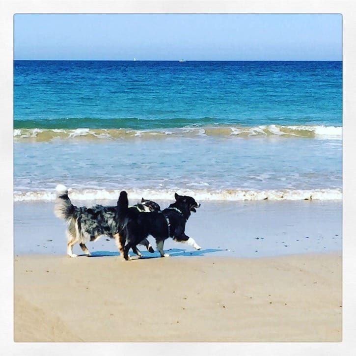 Hund Camping Werlthundetag Atlantik Frankreich Australian Shepherd