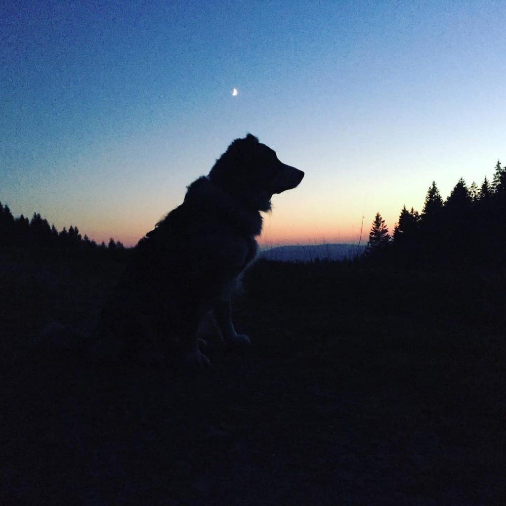 Sonnenuntergang Camping mit Hund Österreich Mühlviertel