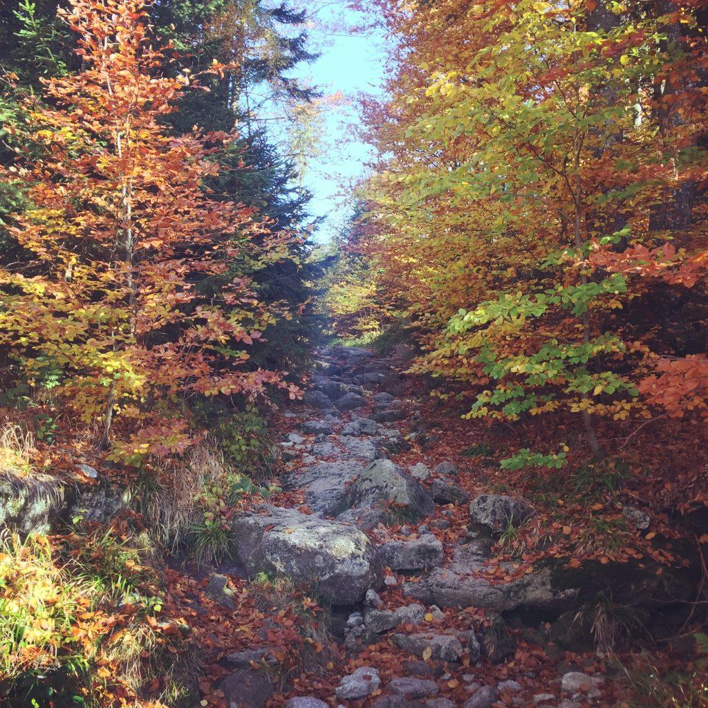 Böhmerwald Bayrischer Wald wandern Österreich Deutschland Tschechien Dreiländer-Eck