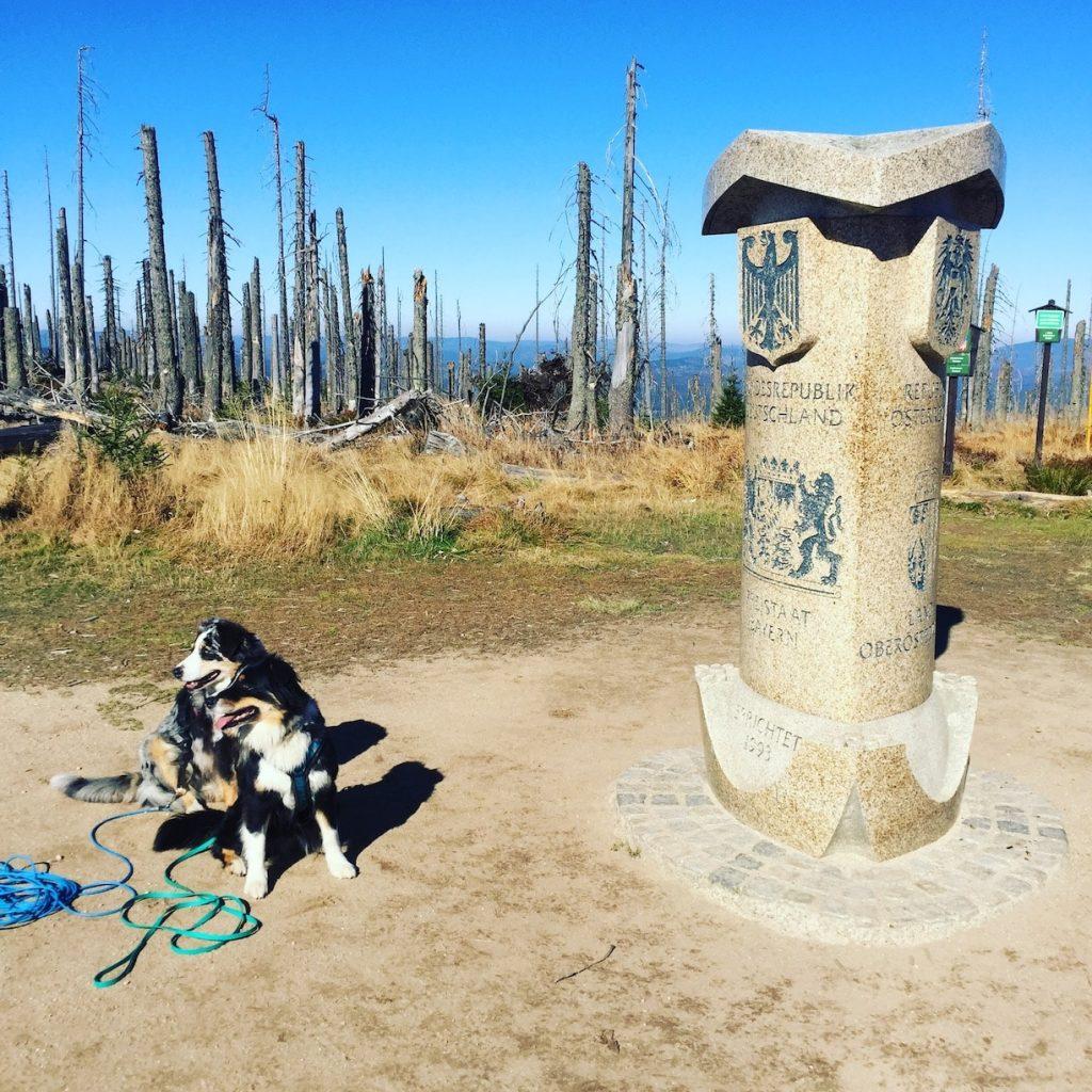 Dreiländereck wandern mit Hund bayrischer Wald Australian Shepherd Grenzwanderung