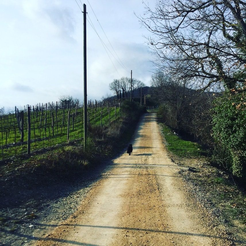 Umbrien Wanderung Hunde Camper Italien