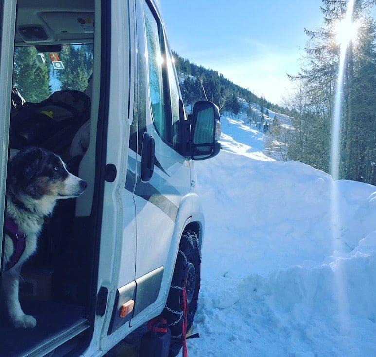 Kelchsau Langer Grund Hund Wintercamping