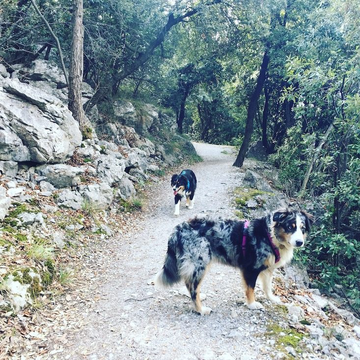 Gardasee Torbole Wandern Hund Camping