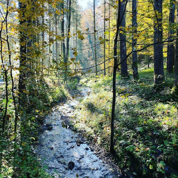 Steiermark Österreich wandern Wald Buschenschank Weingut Klug