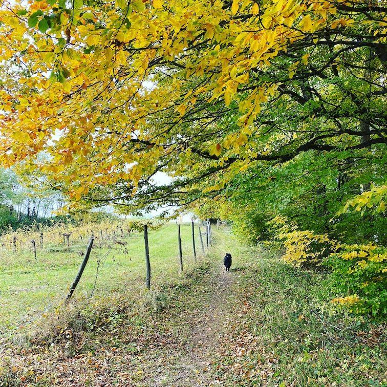 Südsteiermark Grenzpanoramaweg Südalpenweg 03 Wandern mit Hund Weitwanderung Slowenien Herbst