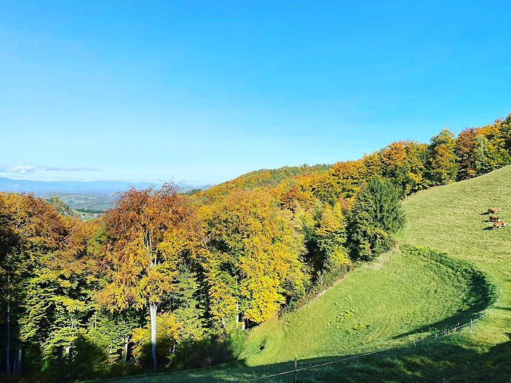 Südsteiermark wandern Weingut Klug Buschenschank Herbst