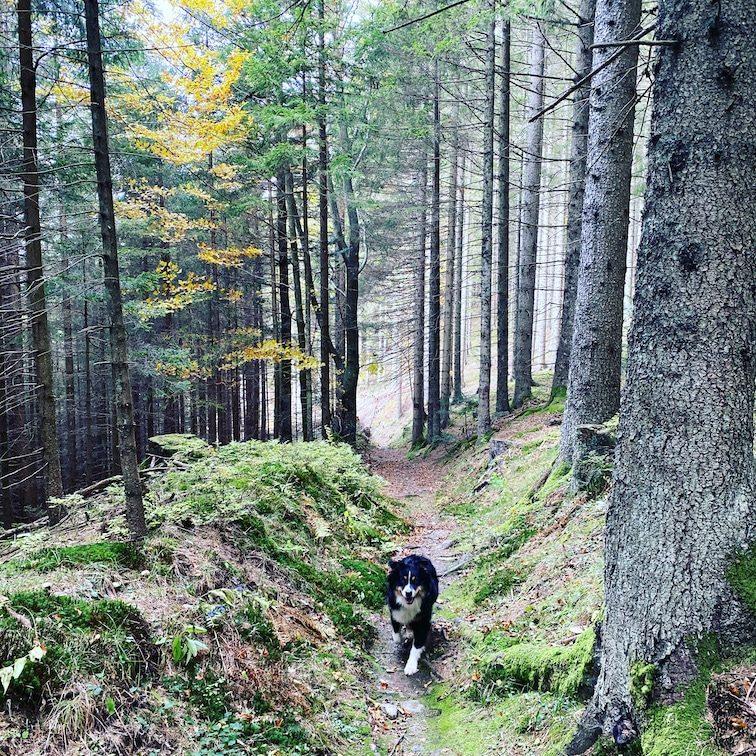 Südsteiermark Wandern mit Hund Soboth Herbst