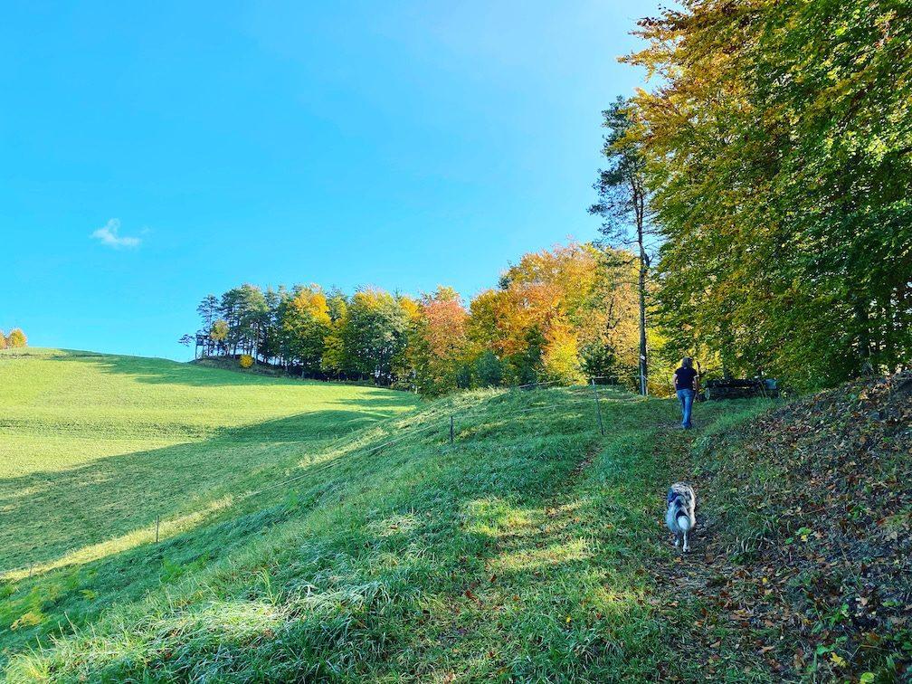 Steiermark Wandern mit Hund Winzer Klug Weinstraße Camping Wanderung