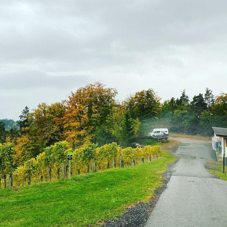 Südsteiermark Weingut Klug Camping Wohnmobil Stellplatz Steiermark Winzer Österreich
