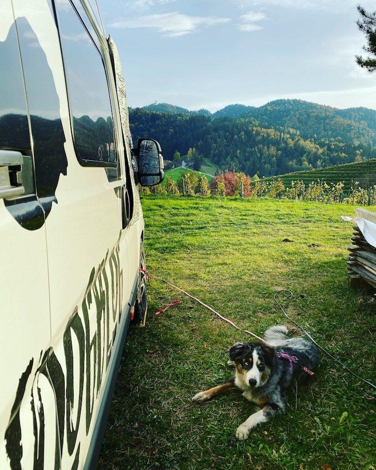Steiermark Weingut Oberguess Reisen mit Hund Weinstraße Camping Wohnmobilstellplatz