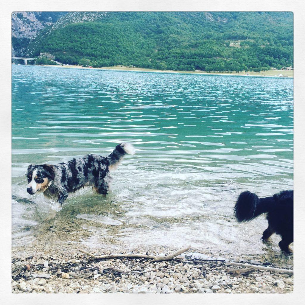 Lac de Sainte croix Frankreich Provence Reisen mit Hund Roadtrip Australian Shepherd