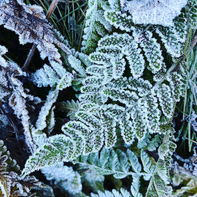 Optimismus-Corona Herbst Wald Raureif