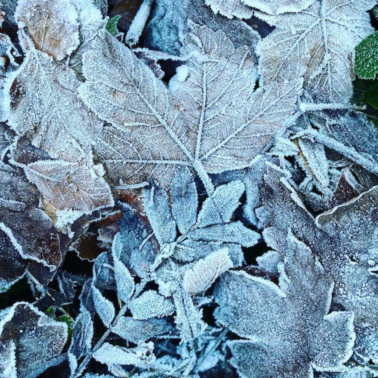 Optimismus-Corona Herbst Raureif Wald