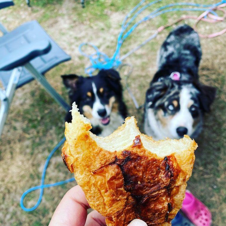 Reisen mit Hund Frankreich Bretagne Australian Shepherd Croissant