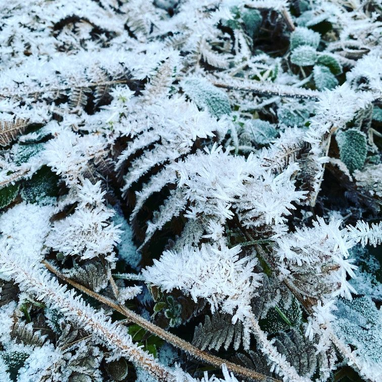 Optimismus_Corona Raureif Wald Farn Winter Herbstspaziergang