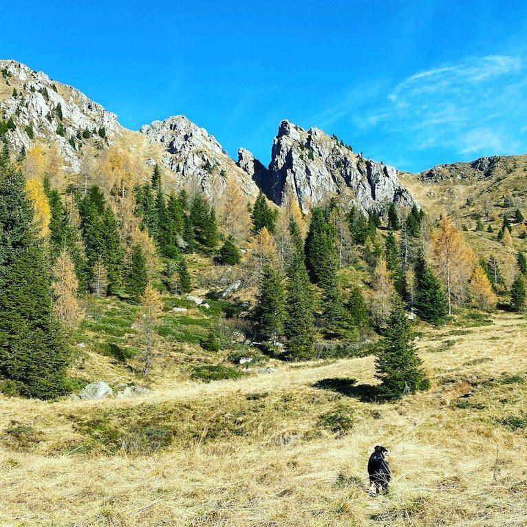 Passo Brocon Lagorai Wandern mit Hund Italien Australian Shepherd Trentino Dolomiten