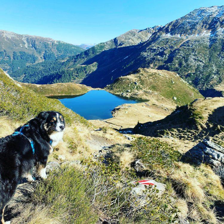 Kitzbüheler Alpen Wandern mit Hund Wanderung Tirol Australian Shepherd Kelchsau Brixental