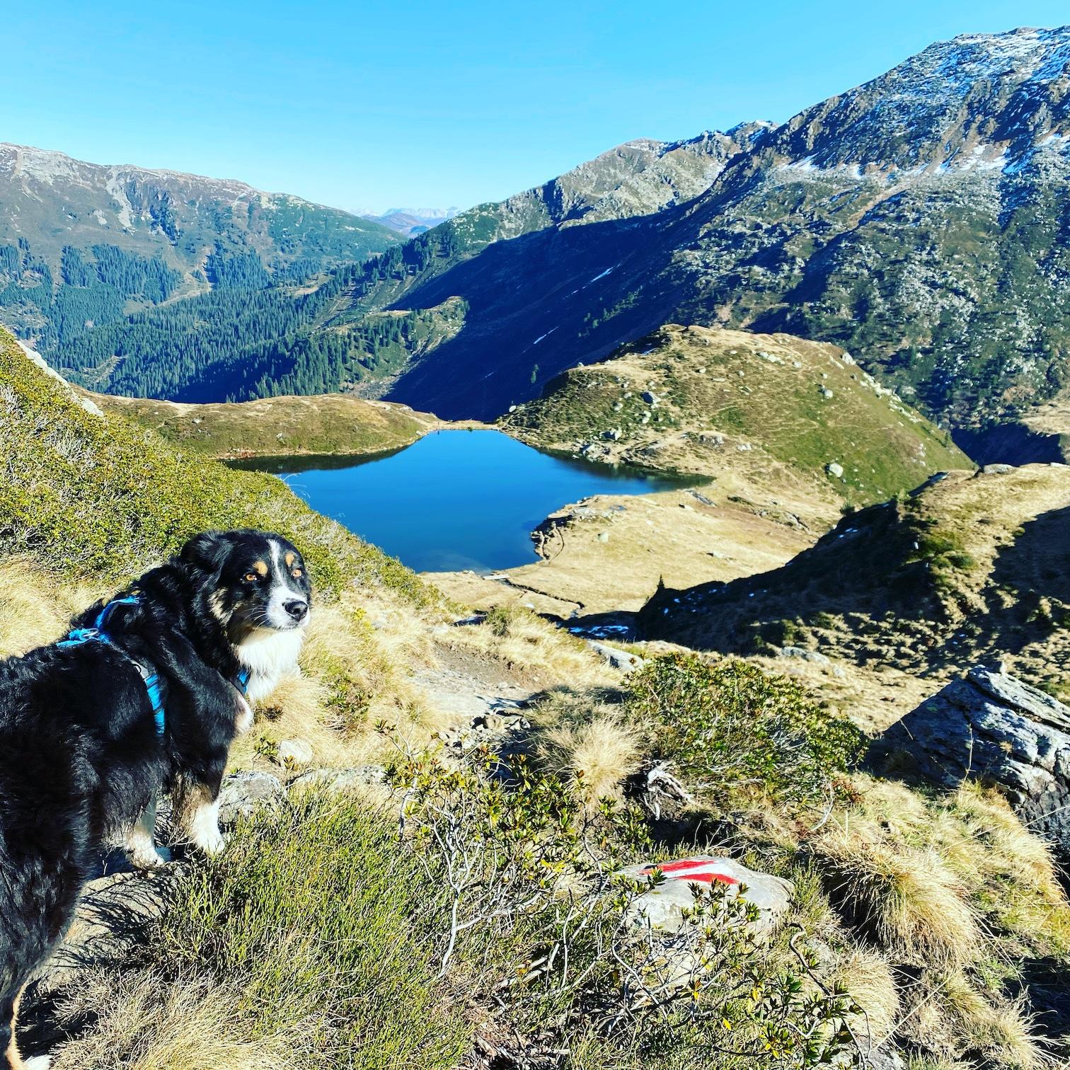 Unterwegs in der Heimat – Herbst-Wandern mit Hund in den Kitzbüheler Alpen