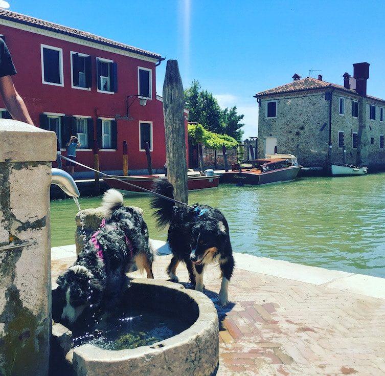 Torcello mit Hund Australian Shepherd Brunnen Trinkwasser Ausflug Lagune von Venedig