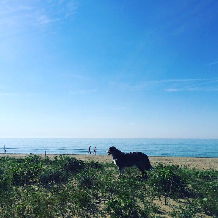 Hund Strand Hundestrand Adria