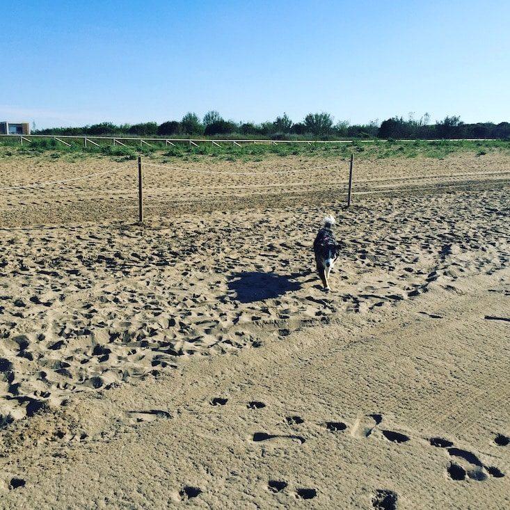 Hundestrand Strand Hund Cavallino
