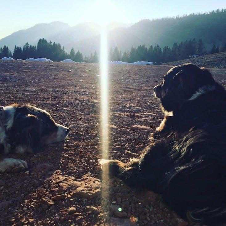 Passo Brecon Lagorai Trentino Ostalpen Camping wandern Hund